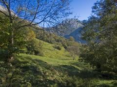 Asturias. (Perchern) Tags: sky espaa naturaleza tree nature landscape arbol spain espanha die fuji na