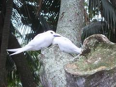 Lord Howe locals (caro_sternberg) Tags: birds lordhoweisland