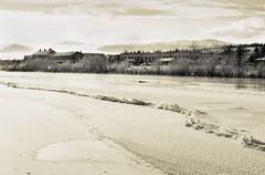 Chilly Beach (eyebex) Tags: winter bw white snow black cold ice beach water fog delete10 delete9 delete5 flow delete2 frozen downtown waterfront delete6 delete7 save3 delete8 delete3 tint delete delete4 save save2 chilly icefog tinted whitehorse yukonriver whitepassbulding horwoodsmall