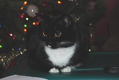 Maggie loves Christmas