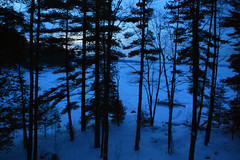 dawn (Vic_DiCiccio) Tags: blue trees winter snow dawn muskoka blueribbonwinner