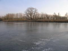 (mia_4loose) Tags: winter germany thringen fishing pond wasser ufer eis schilf teiche rohrkolben herbsleben
