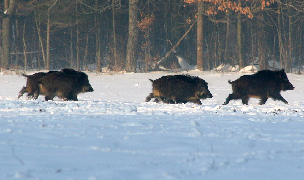 Bialowieza Forest