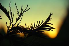 Vegetationes (i) Tags: nature nikon mardelplata acantilados d80 18135mm flickrclassique