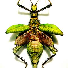 "Big Bug…!!! (Denis Collette...!!!) Tags: canada bug bravo quebec quality collette onwhite denis themoulinrouge youtube portneuf firstquality mywinners abigfave colorphotoaward impressedbeauty aplusphoto pontrouge naturefinest megashot brillianteyejewel ""deniscollette"" goldstaraward world100f ""thebug"" ""direstraits"""