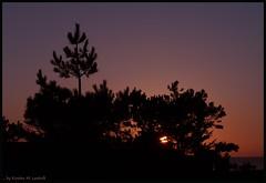Hideout (Kirsten M Lentoft) Tags: trees sunset people bench denmark couple silhouettes mywinners momse2600 bjergenordstrand goodnightdearest mmuahhh kirstenmlentoft