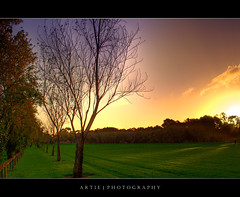 Langman Grove - HDR (:: Artie | Photography ::) Tags: park trees sunset sky colour grass canon colours australia adelaide southaustralia hdr campbelltown artie linearpark klemzig 400d rebelxti langmangrove