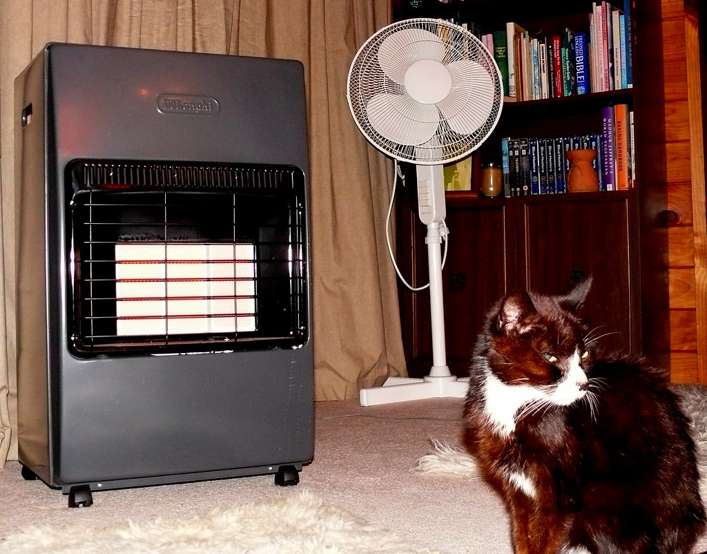 Heater, Fan, Cat