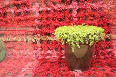 Vaso in Vetrina (vecchiotinti) Tags: milano negozio vetrina vaso