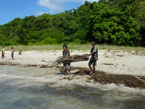 Alor Island - Collecting wood at Pantar Island