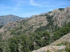 Le versant ravin de Calanconi entre le col 1160m et la forêt de Casa Infurcata