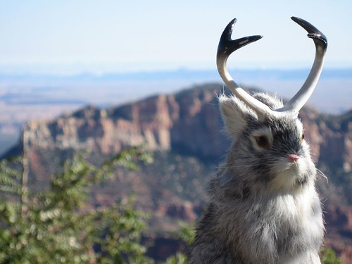 jackalope stuffed animal, posed over a scenic backdrop of sky and plains
