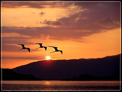 Heading home (Grete Howard) Tags: ocean sunset nature birds wow exposition soe naturesfinest 10faves shieldofexcellence anawesomeshot impressedbeauty sunsetpicnik diamondclassphotographer flickrdiamond naturewatching betterthangood breathtakingeyecatcher