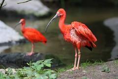 IMG_4796_emmen (Arie van Tilborg) Tags: zoo dieren emmen noorderdierenpark dierentuin mediacollege arievantilborg