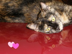 Valentine's Cat (K. Horn) Tags: reflection cat calendar tortoiseshell card valentines tortie picnik perk smrgsbord excellentphotographerawards