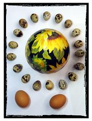 Cerchio di uova