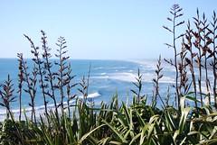 Muriwai beach (teddypetal) Tags: ocean sea newzealand summer sun beach sunshine blacksand sand rocks surf waves fishermen flight land volcanic gannets muriwai