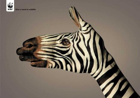 WWF_Zebra