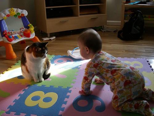 baby vs. cat 2