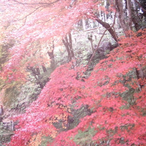 【写真】Colored leaves [ Shorinin / Kyoto ]