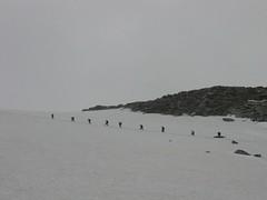 Salendo verso il Gran Paradiso (giuseppetabbia) Tags: valledaosta ghiacciaio granparadiso cordata