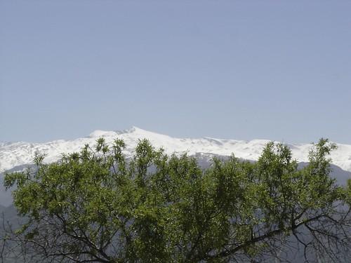 Sierra Nevada tras un almendro