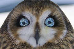 Owl Eyes (Creativity+ Timothy K Hamilton) Tags: blue green bird eye face eyes feathers feather owl stare bluegreen flickrsbest