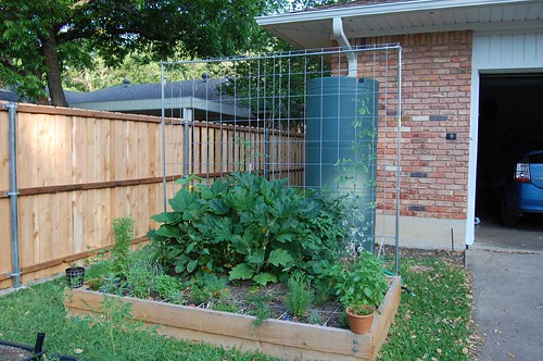 Veggie Garden May 21