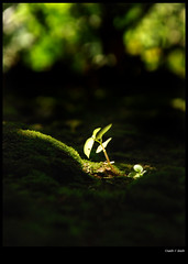 Environment Day (sash/ slash) Tags: life light plant green grass leaves dark leaf nikon earth sash growth shade eco sprout d80 sajesh chemperi