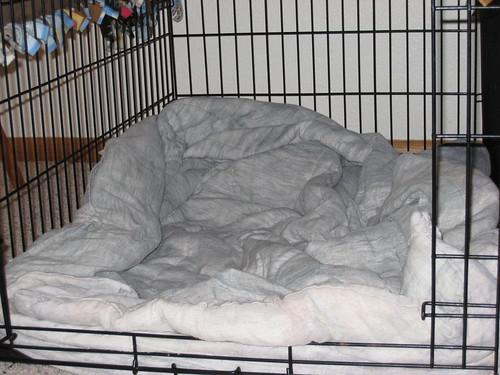 Cheyenne's bed empty