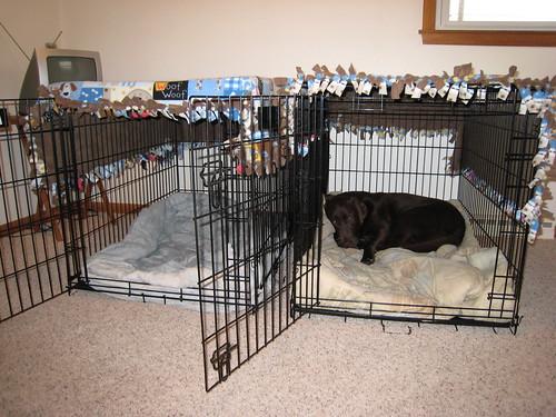 Cheyenne & Dakota's beds