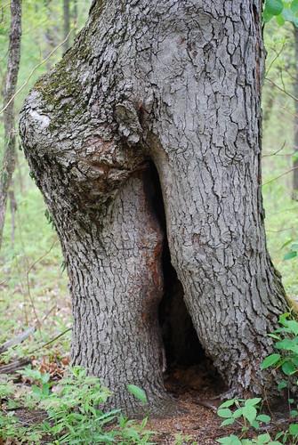 tree DSC_7010