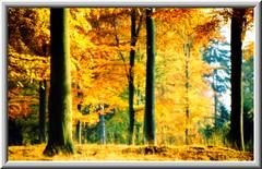 Beautiful Autumn Forest (Tobi_2008) Tags: autumn trees tree nature forest germany landscape deutschland herbst natur landschaft wald bume allemagne germania bej mywinners abigfave platinumphoto anawesomeshot ysplix theunforgettablepictures theperfectphotographer overtheshot