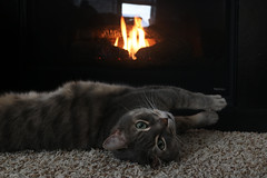 Warming the Paws (heather dawn ❣) Tags: northcarolina durham raleigh cat garrus