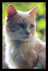 PiGio (Germano Pozzati) Tags: camera old cats cat 35mm lens nikon d70 zoom 28 nikkor 35 70 gatto gatti f28 70mm 3570 f28d 28d bestofcats 35mm70mm friendsofzeusphoebe boc0511