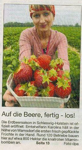 Die Erdbeersaison ist eröffnet
