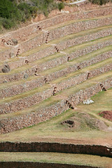 those amazing stairs (daniel virella) Tags: lines inca wall cuzco architecture stairs america stones circles cusco curves steps perú andes walls agriculture sacredvalley moray incan vallesagrado enginnering tawantinsuyu