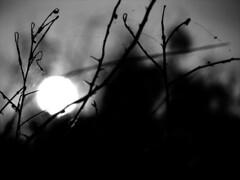 every summer is the last... (Eseme) Tags: summer dreams diamondclassphotographer