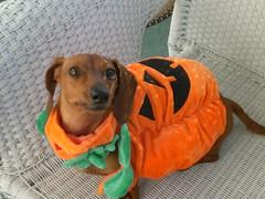 Halloween Sloopy
