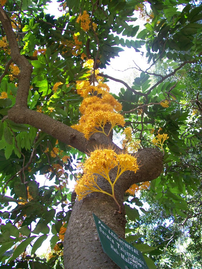 did you find this tree in lalbag ?