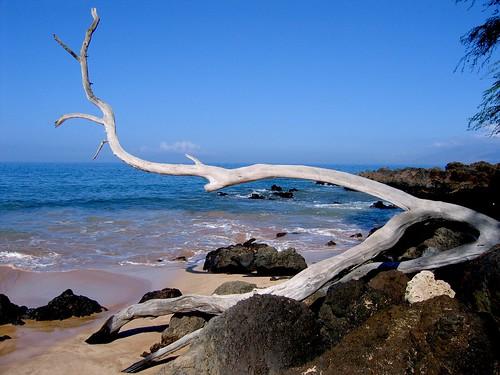 Maui Branch