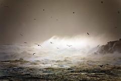 more birds enjoying a windy day :o) (helen geraghty) Tags: ireland sea nature water birds bravo waves windy atlantic mayo nell anawesomeshot naturewatcher platinumheartaward nellymunn helenmunnelly helengeraghty