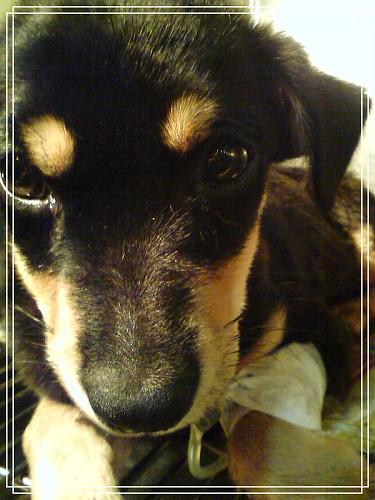 我的狗DSC01145富貴