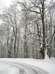 Il Silenzio dell'Inverno (arsomnia) Tags: alberi neve boschi