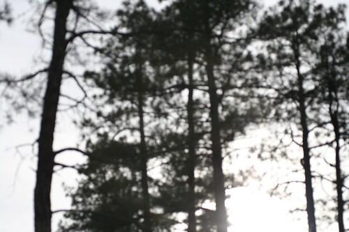 Tree-o III