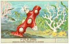 corail 2