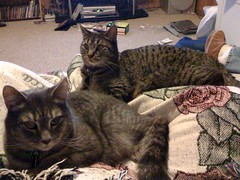 Cats in a Lap