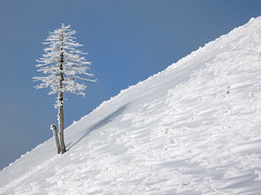 Muntii Baiului (Catalin2K8) Tags: travel blue winter sky white snow tree landscape photo europe frost superb hiking hill sunny romania carpathians masterpiece lonelytree carpati prahova carpathian carpathianmountains muntiibaiului sorica superbmasterpiece diamondclassphotographer awesomepictures top20white dutca urechea