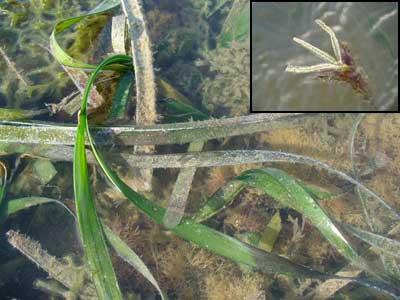 Seagrass-P1060081