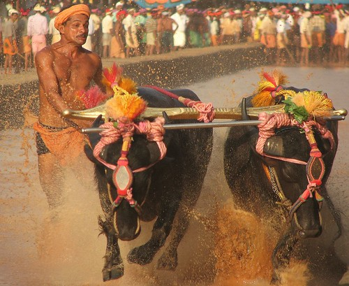 Kambala, Up, Close And Personal